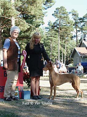 oland_big_gr_5_faraohund